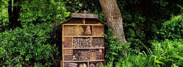 Maison pour insectes