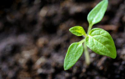 Les semis, quelle période et comment ?