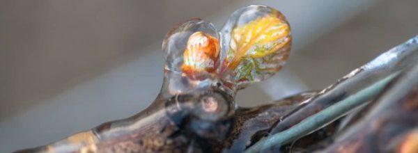 Comment protéger votre jardin des gelées de printemps ?