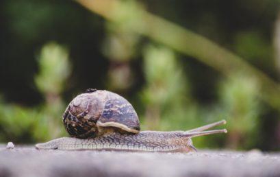 Comment se débarrasser des escargots et limaces